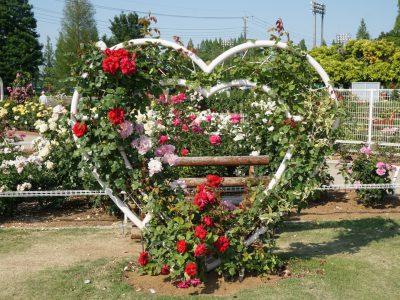 【伊奈】バラ園(町制施行記念公園) バラがたくさん、とってもいい香り~